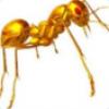 蚂蚁也是肉