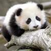 熊猫不回撤