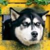 wolfgodcg